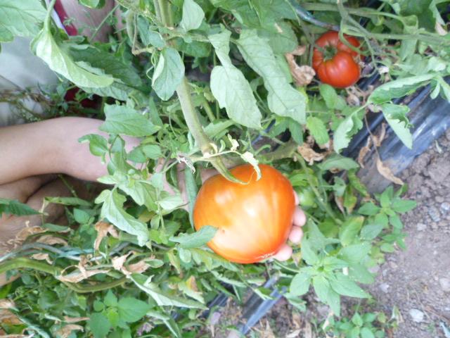Table d'hôtes pour gite et chambres d'hotes jardin potager légumes bio