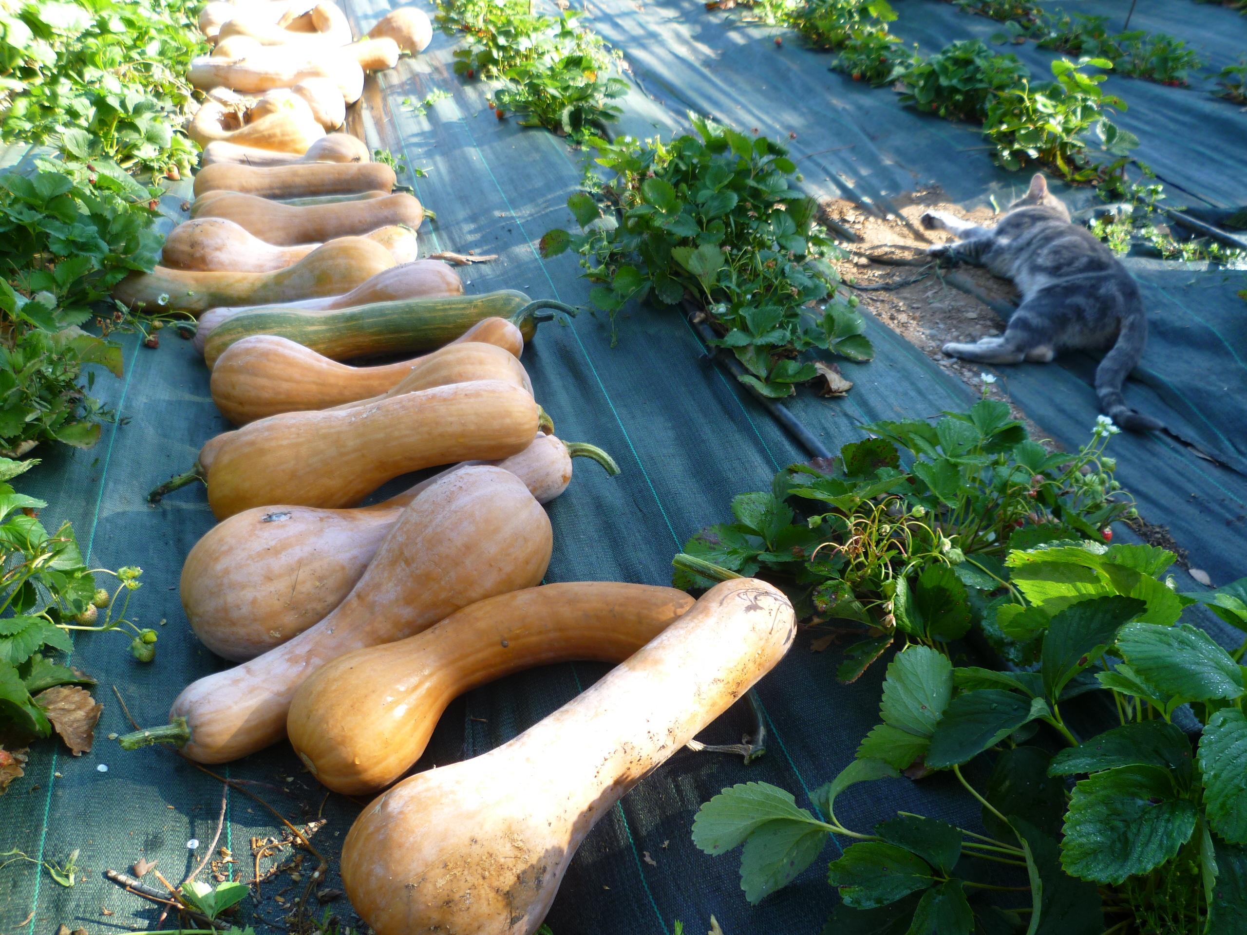 Chambre d'hote La Maison de Nathalie Location de vacances var Provence Cote d'Azur jardin potager bio